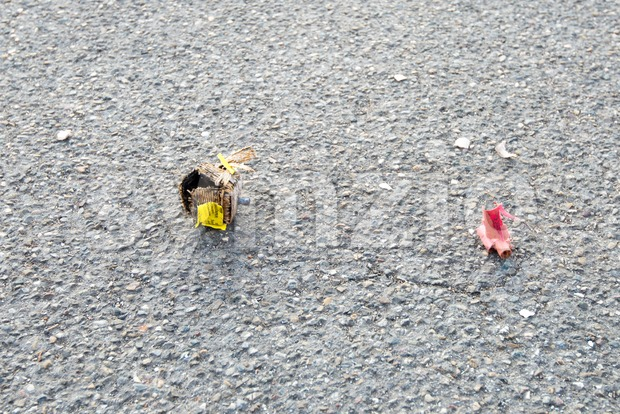 Ostfildern-Scharnhausen, Germany - January 1, 2017: Used fireworks firecrackers lying on the street after exploding during New Year celebration.