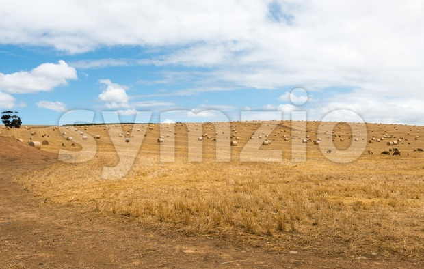 Straw bales on a harvested wheat field Stock Photo