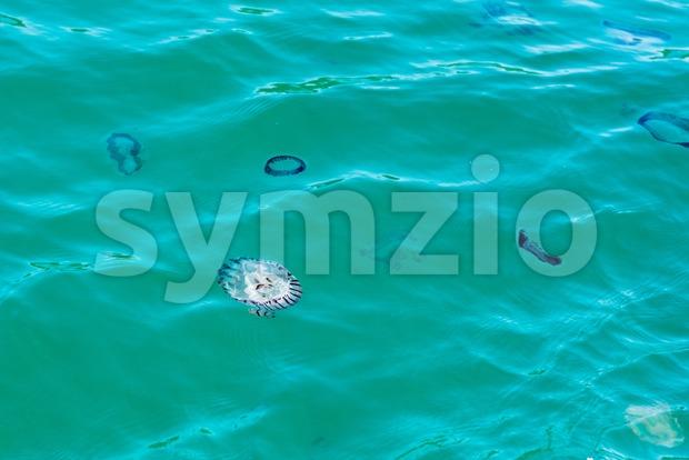 Jellyfish in the ocean near Knysna in South Africa