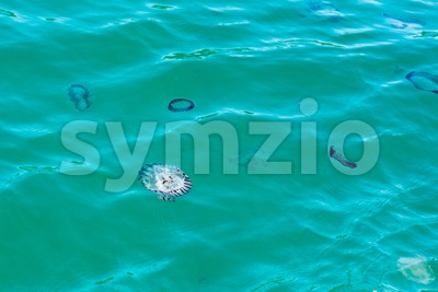 Jellyfish in the ocean of South Africa Stock Photo
