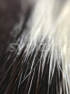 cow skin texture Stock Photo