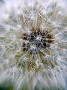 Extreme macro of a dandelion flower Stock Photo