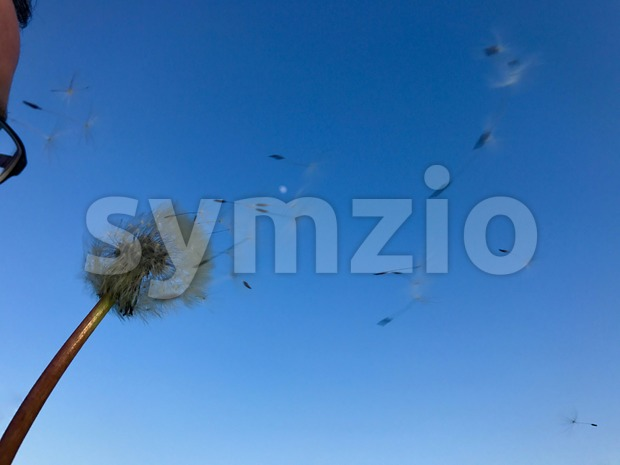 Man with glasses blowing dandelion seeds across a clear blue sky