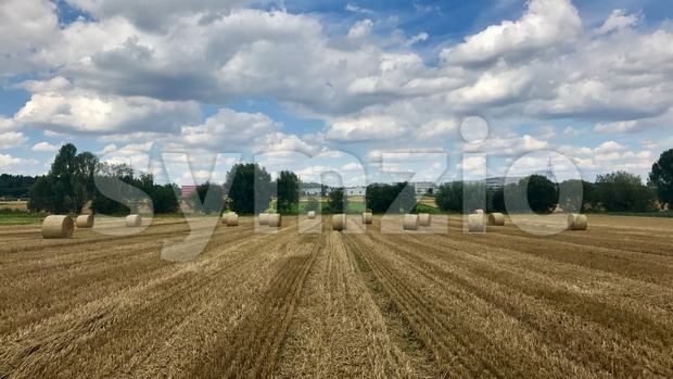 Hay bales on the field Stock Photo