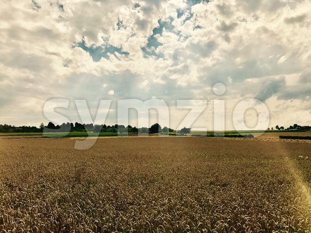Dramatic sky with lightrays over golden corn field