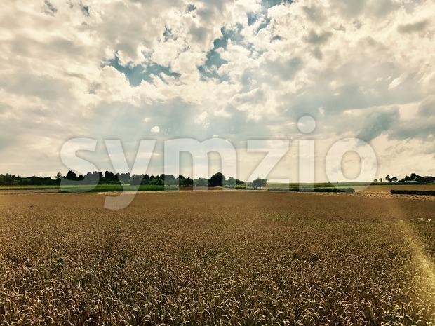 dramatic sky over corn field Stock Photo