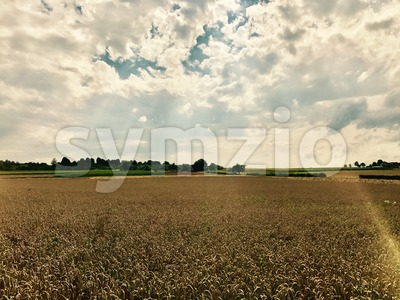 dramatic sky over corn field Stock Photo