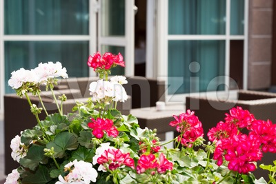 Plants and brown garden furniture on terrace of a hotel Stock Photo