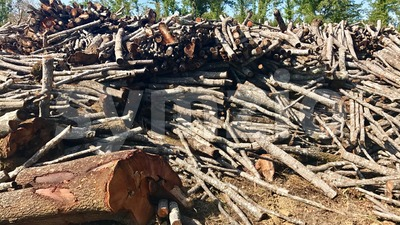 timber stacked up rather rough after felling Stock Photo