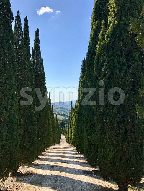 Typical country road in Tuscany, Italy lined with cypress trees on a sunny day
