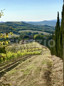 Typical landscape in Tuscany with cypress trees Stock Photo