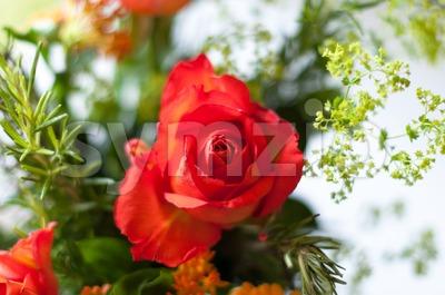 Orange Bouquet Stock Photo