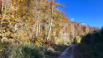 beautiful autumn forest Stock Photo