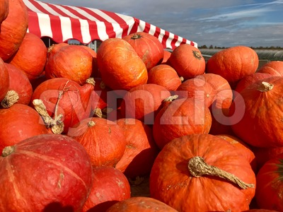 Heap of Autumn Carving Pumpkins for Sale Stock Photo