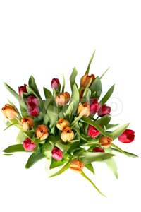 Bouquet of tulips on white - vertical Stock Photo