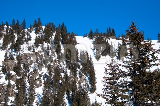 Snowy mountain with  trees on sunny day at Montafon, Austria