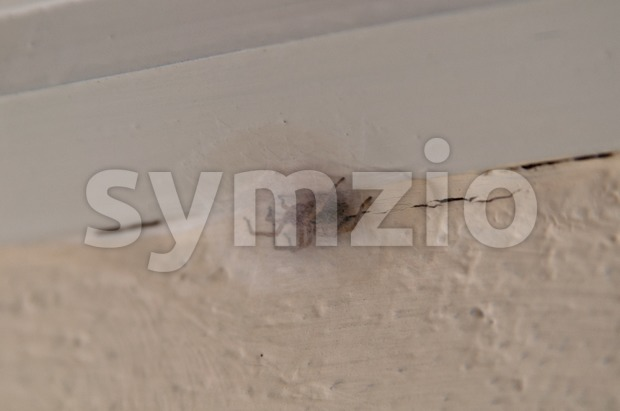 Spider with egg cocoon at wooden beam over concrete wall