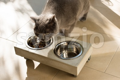 Beautiful cat eating out of a food bowl Stock Photo