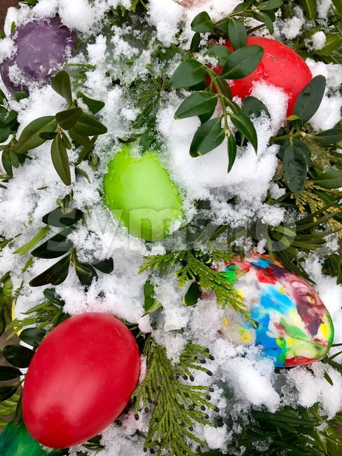 Plastic easter eggs with fir and buxus decoration in snow