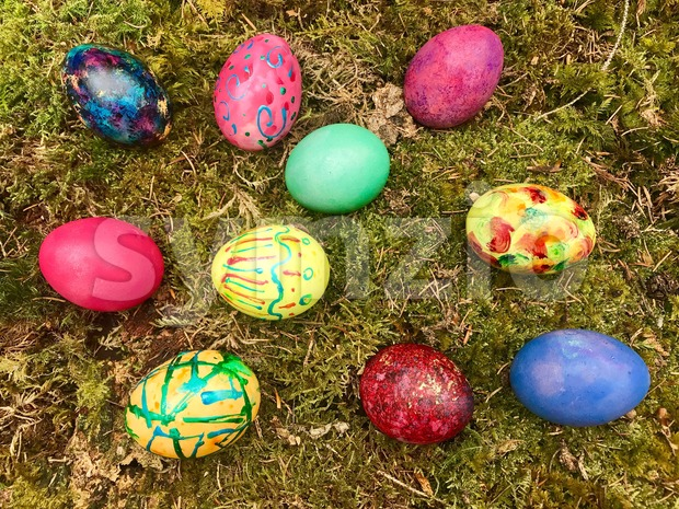 Colourful Easter eggs in green moss. Festive decoration. Happy Easter!