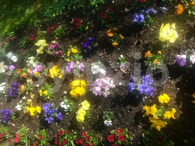 Blossoming spring flowers on a flowerbed Stock Photo