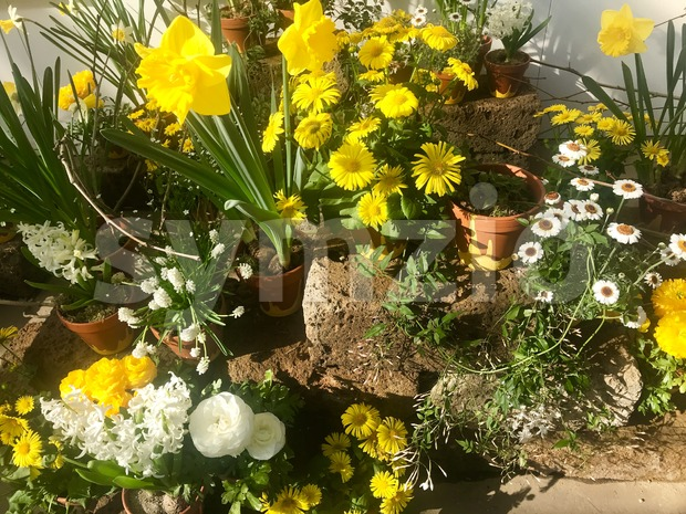 spring garden flower arrangement in pots Stock Photo