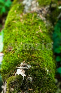 Moss On Tree Stock Photo