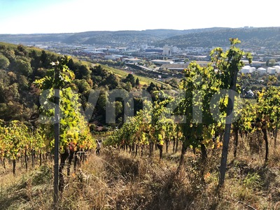 vineyards in the Stuttgart area Stock Photo