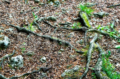 Forest floor Stock Photo