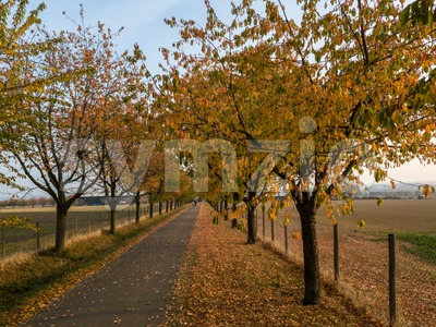 Alley in autumn park with colorful foliage Stock Photo