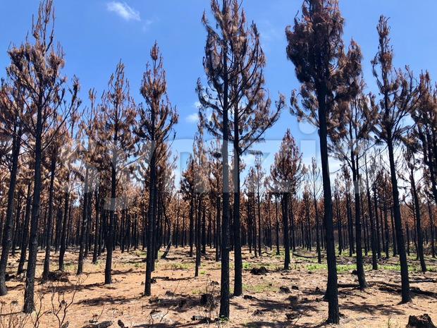 Burnt bush land after a bushfire near Knysna Stock Photo