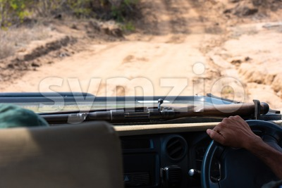 Safari guide driving with his rifle in the bush of South Africa Stock Photo