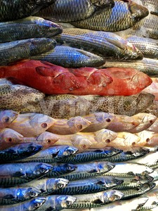 Pile of different fresh fish Stock Photo