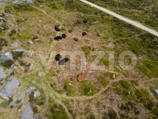 Aerial view on cows along Curbar Edge Stock Photo