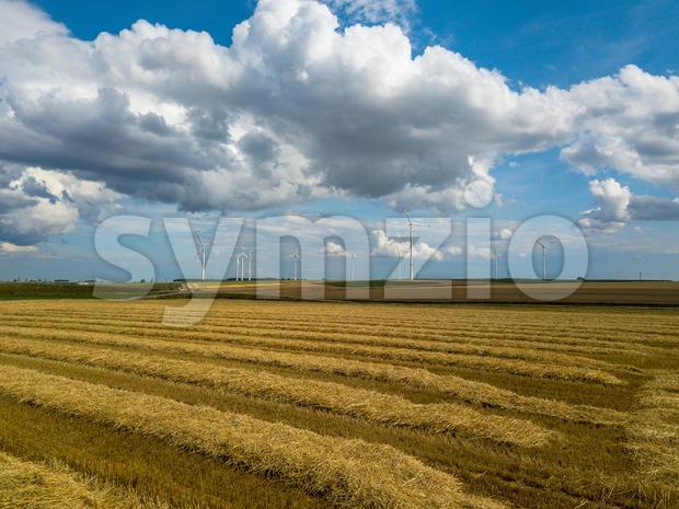 wind turbines in corn fields Stock Photo