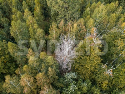 aerial view on a forest in Germany Stock Photo