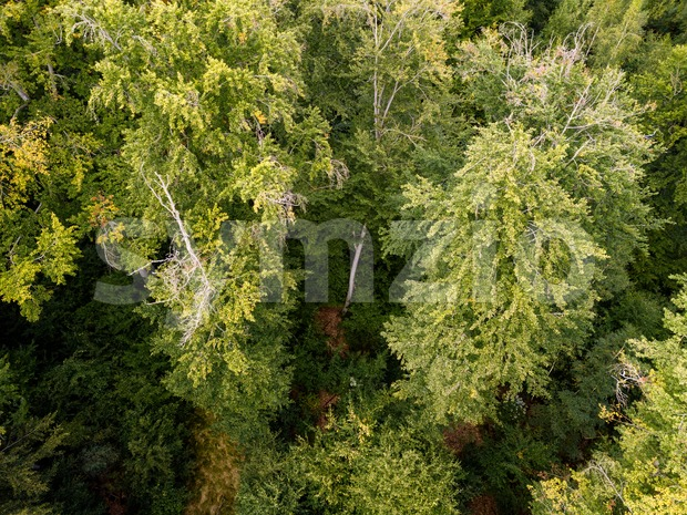 Aerial view on a forest in Germany taken using a drone