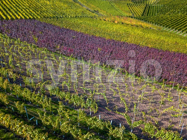 Vineyards in fall colors near Stuttgart, Germany Stock Photo