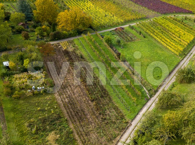 Garden plots with vegetables fields and vineyards Stock Photo