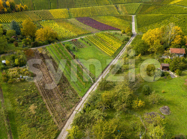 Garden plots with vegetables fields and vineyards in autumn near Stuttgart, Germany