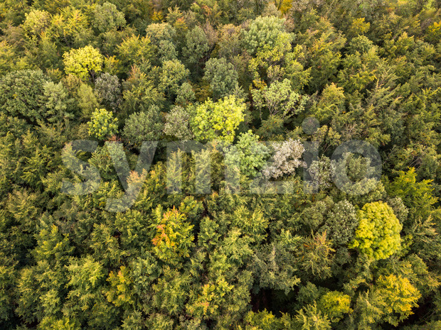 Aerial view of forest in autumn Stock Photo