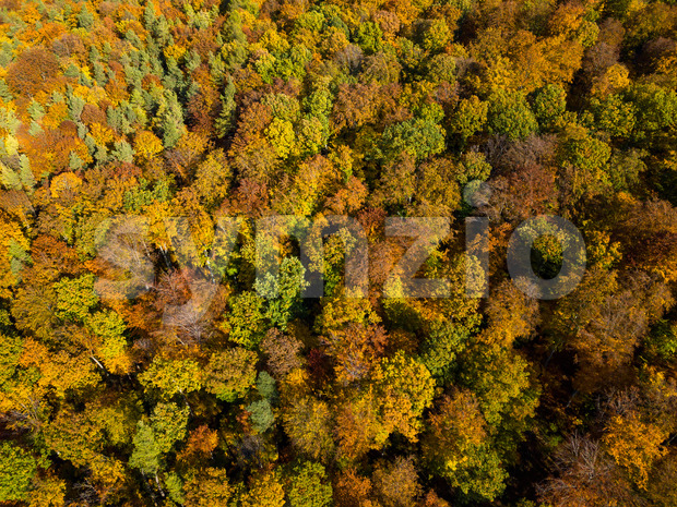 Aerial view of autumn forest. Fall landscape with red, yellow and green foliage as seen from above Stock Photo