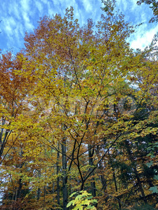 Beautiful autumn scene with trees full of colorful leaves in a forest near Stuttgart, Germany Stock Photo