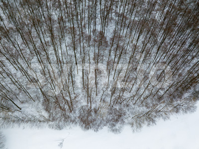 Aerial view on winter landscape with trees in deciduous forest covered with hoarfrost Stock Photo