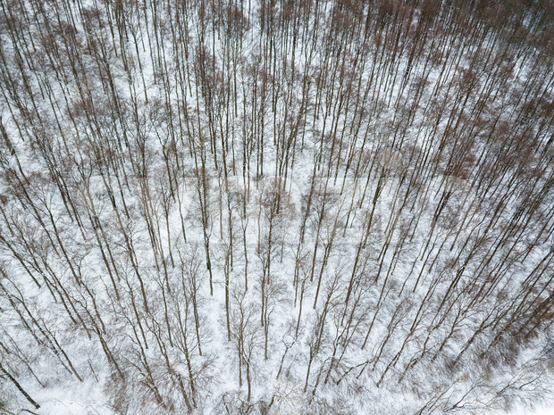Aerial view on winter landscape with trees in deciduous forest covered with hoarfrost