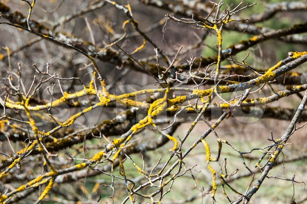 Lichen Branch Stock Photo