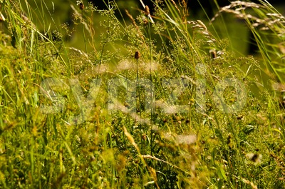 wild grasses Stock Photo