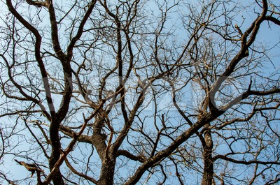 tree branches and sky Stock Photo