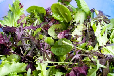 Mixed lettuce Stock Photo