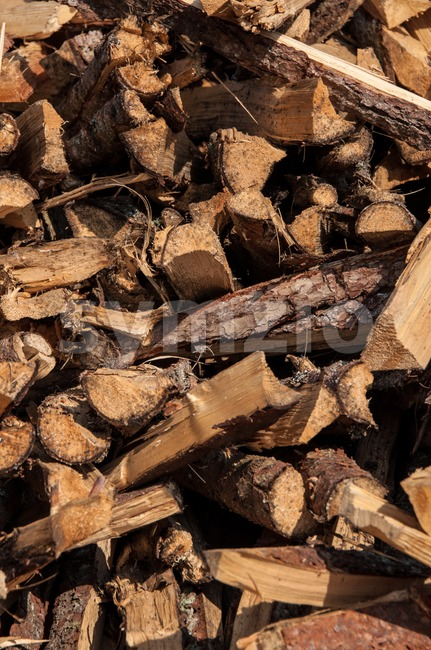 Split wood pile in forest with wood in different lengths